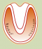 60px-Barhuf-thueringen_Logo.png