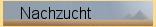 Ada-gestuet-Nachzucht.png